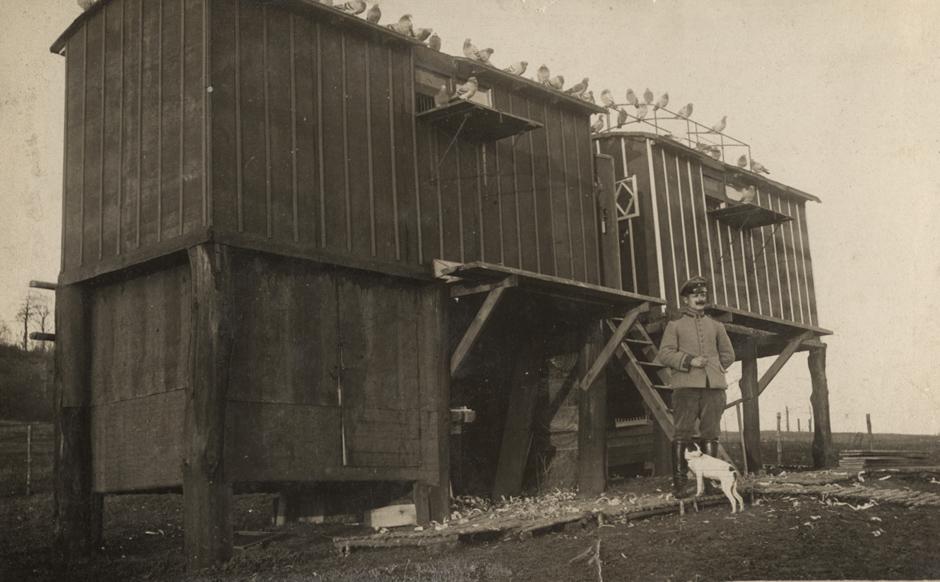 Nemška postaja z golobi pismonošami, 1916.