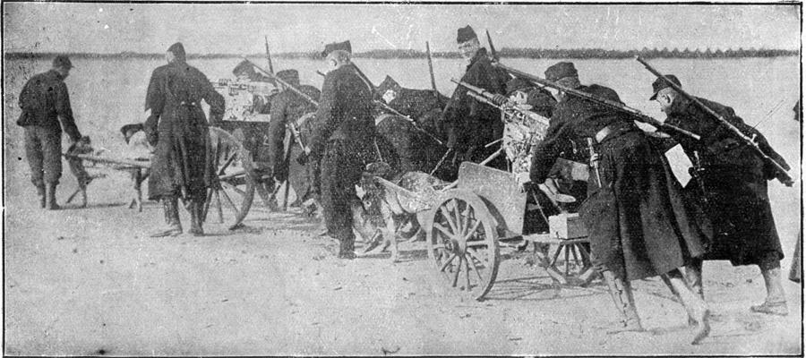 Angleški vojaki s strojnimi puškami, ki jih vozijo psi.
